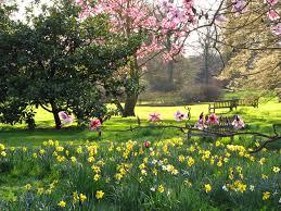 spring flowers2