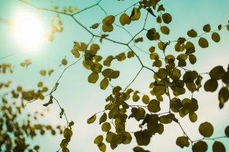 sunlight leaves sky